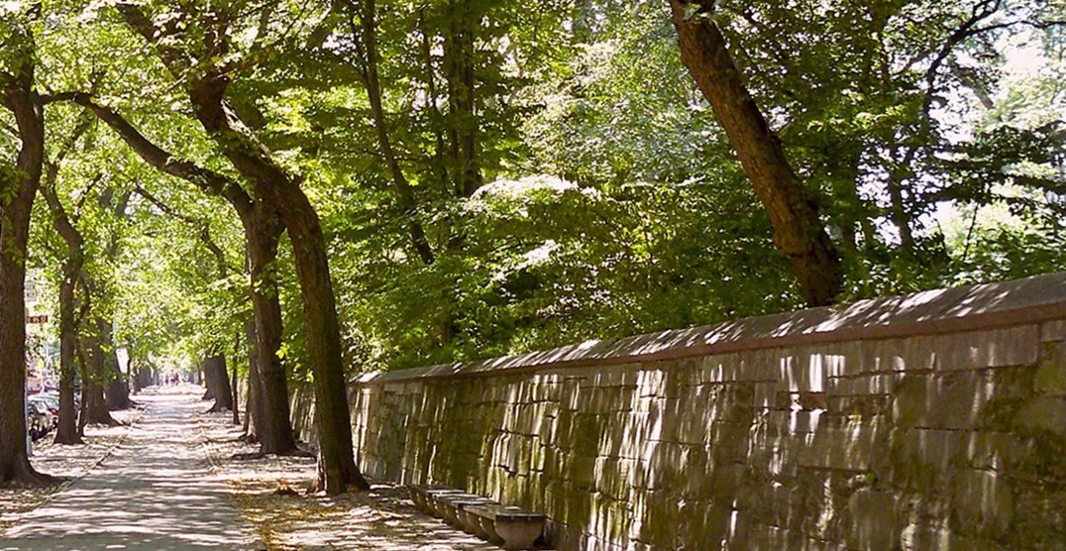 Bild eine Baumallee mit einer Mauer auf der rechten Seite